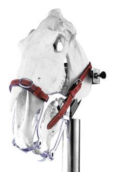 WORLD WIDE EQUINE Maulgatter für Pferde
