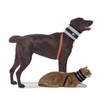 Halskragen für Hunde und Katzen BITE NOT
