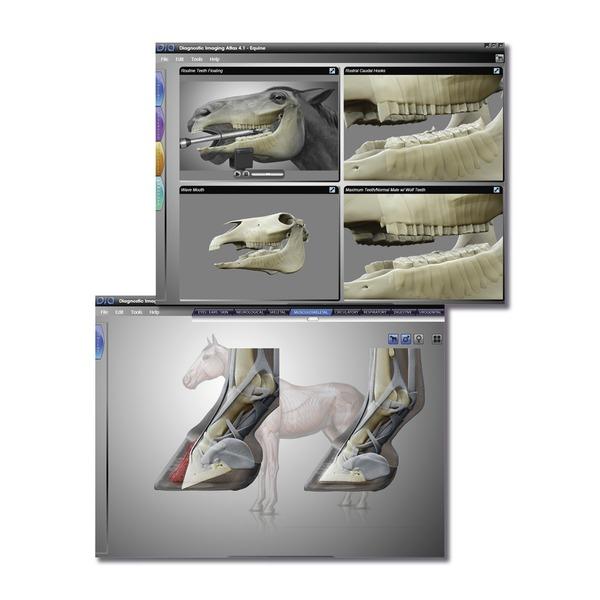 DIA - Diagnostic Imaging Atlas Pferd